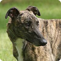 Adopt A Pet :: Isaac - Portland, OR