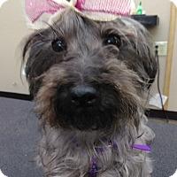 Adopt A Pet :: Cami - Englewood, NJ