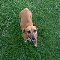 Adopt A Pet :: Heidi3 - Orangeburg, SC