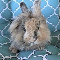 Adopt A Pet :: Gumdrop - Hillside, NJ