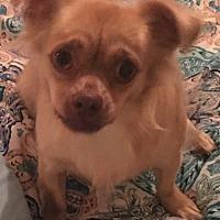 Adopt A Pet :: Peanut - Sunbury, OH