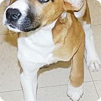 Adopt A Pet :: Jasmine - Washington Court House, OH