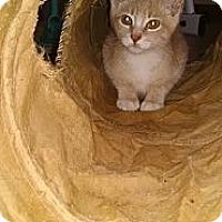 Adopt A Pet :: Chandler & Chelesa - Sterling Hgts, MI