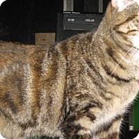 Adopt A Pet :: Cala - Dallas, TX