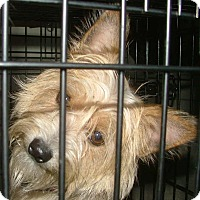 Adopt A Pet :: Waldo - North Little Rock, AR