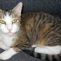 Adopt A Pet :: Jeri - San Antonio, TX