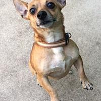 Adopt A Pet :: Elisa - Hainesville, IL