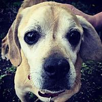 Adopt A Pet :: Charlie D3651 - Shakopee, MN