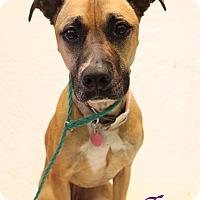 Adopt A Pet :: Lillie - Bradenton, FL