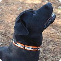 Adopt A Pet :: ACE - Red Bluff, CA