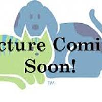 Adopt A Pet :: Brutus - Hastings, MN