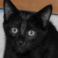 Adopt A Pet :: Mars - Robinson, IL