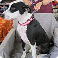 Adopt A Pet :: ISAAC - Anna, IL