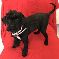 Adopt A Pet :: Jolie - San Francisco, CA