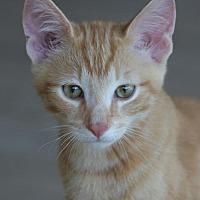 Adopt A Pet :: Aslan - North Fort Myers, FL