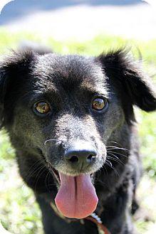 Cocker Spaniel Mix Dog for adoption in Boynton Beach, Florida - May