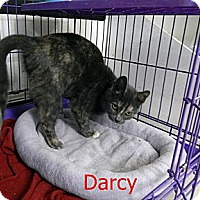 Adopt A Pet :: Darcy - Chilhowie, VA