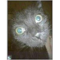 Adopt A Pet :: Pistachio - Owasso, OK