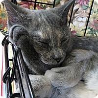 Adopt A Pet :: Faith - Frederick, MD