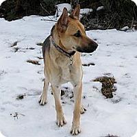 Adopt A Pet :: Minx - Gorgeous Girl - Seattle, WA