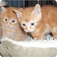 Adopt A Pet :: Kosmo - Acme, PA