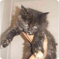 Adopt A Pet :: Charlotte - Montreal, QC
