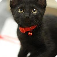 Adopt A Pet :: Dewey - Sacramento, CA