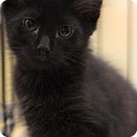 Adopt A Pet :: Ninja - Sacramento, CA
