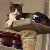 Adopt A Pet :: Oscar - Flushing, NY