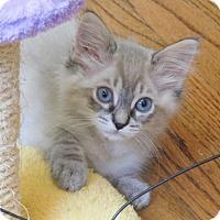 Adopt A Pet :: Francis - Davis, CA