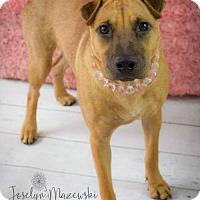 Adopt A Pet :: Tazo - Houston, TX