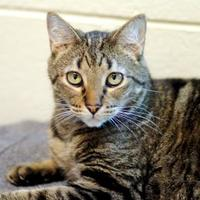 Adopt A Pet :: Ted - Charleston, SC