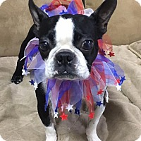 Adopt A Pet :: Gucci - Katy, TX