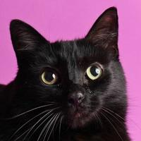 Adopt A Pet :: Toby - Longmont, CO