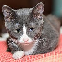 Adopt A Pet :: Tulip - Davis, CA