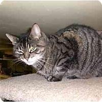 Adopt A Pet :: Loki - Lombard, IL