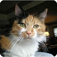 Adopt A Pet :: Patches - Portland, OR