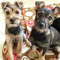Adopt A Pet :: Claira - Loxahatchee, FL