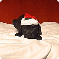 Adopt A Pet :: Maya - Hagerstown, MD