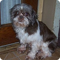 Adopt A Pet :: Kara - Denver, IN