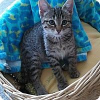 Adopt A Pet :: Ozzy - Monroe, NC