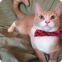 Adopt A Pet :: Flynn Ryder - Cerritos, CA