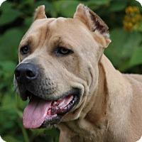 Adopt A Pet :: Aslan-VA - Virginia Beach, VA