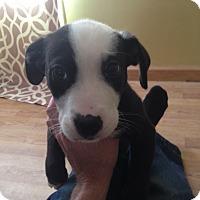 Adopt A Pet :: Zippy - Owensboro, KY