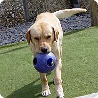 Adopt A Pet :: Tobias - Yorktown, VA