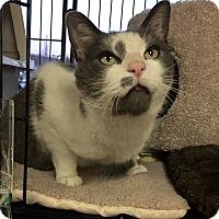 Adopt A Pet :: Vinnie - Horsham, PA
