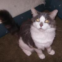 Adopt A Pet :: Scotty - Greensboro, NC