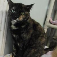 Adopt A Pet :: Mini May - Shelbyville, KY