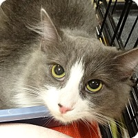 Adopt A Pet :: MISSY - Diamond Bar, CA