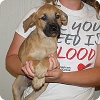 Adopt A Pet :: PINE TREE PUPS A - Corona, CA